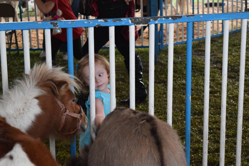 kid looking at ponies